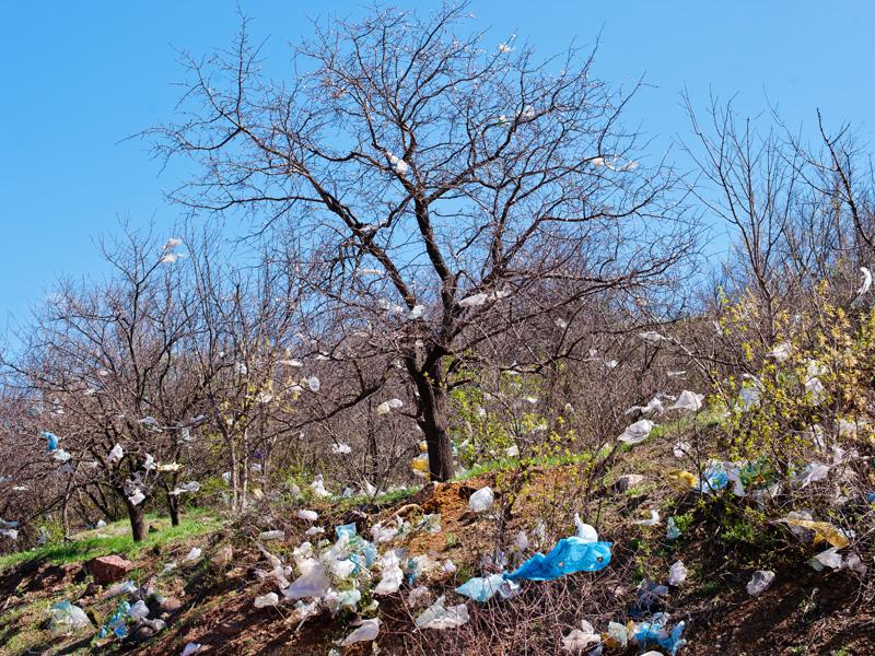Plastic bag waste littering trees