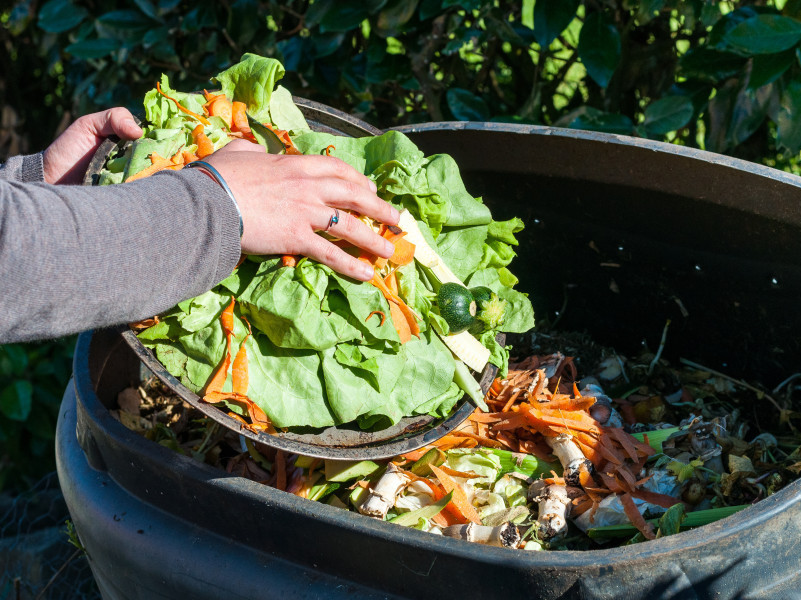 A householder disposing of food and garden organics FOGO waste