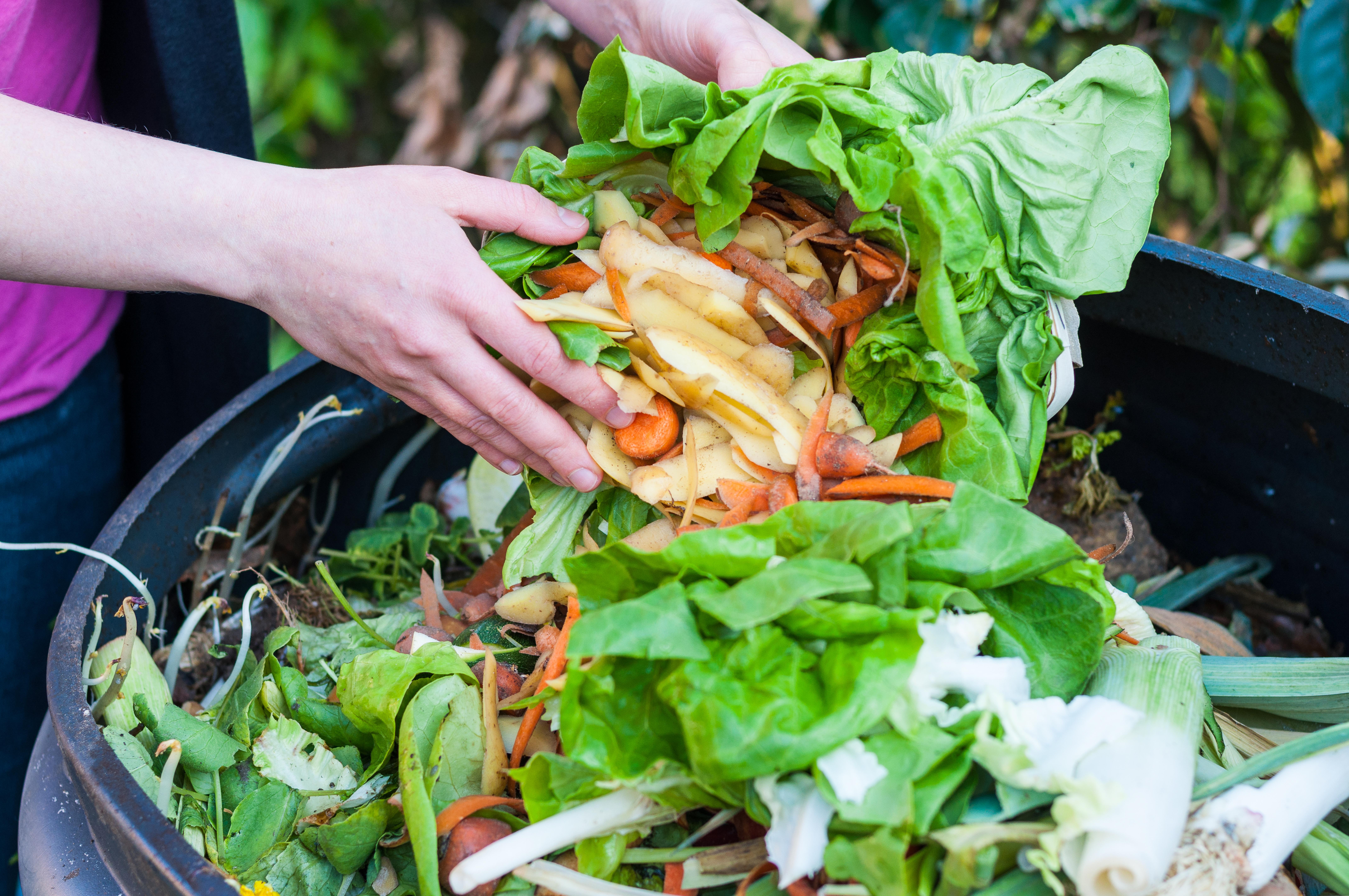 organic recycling_188538842