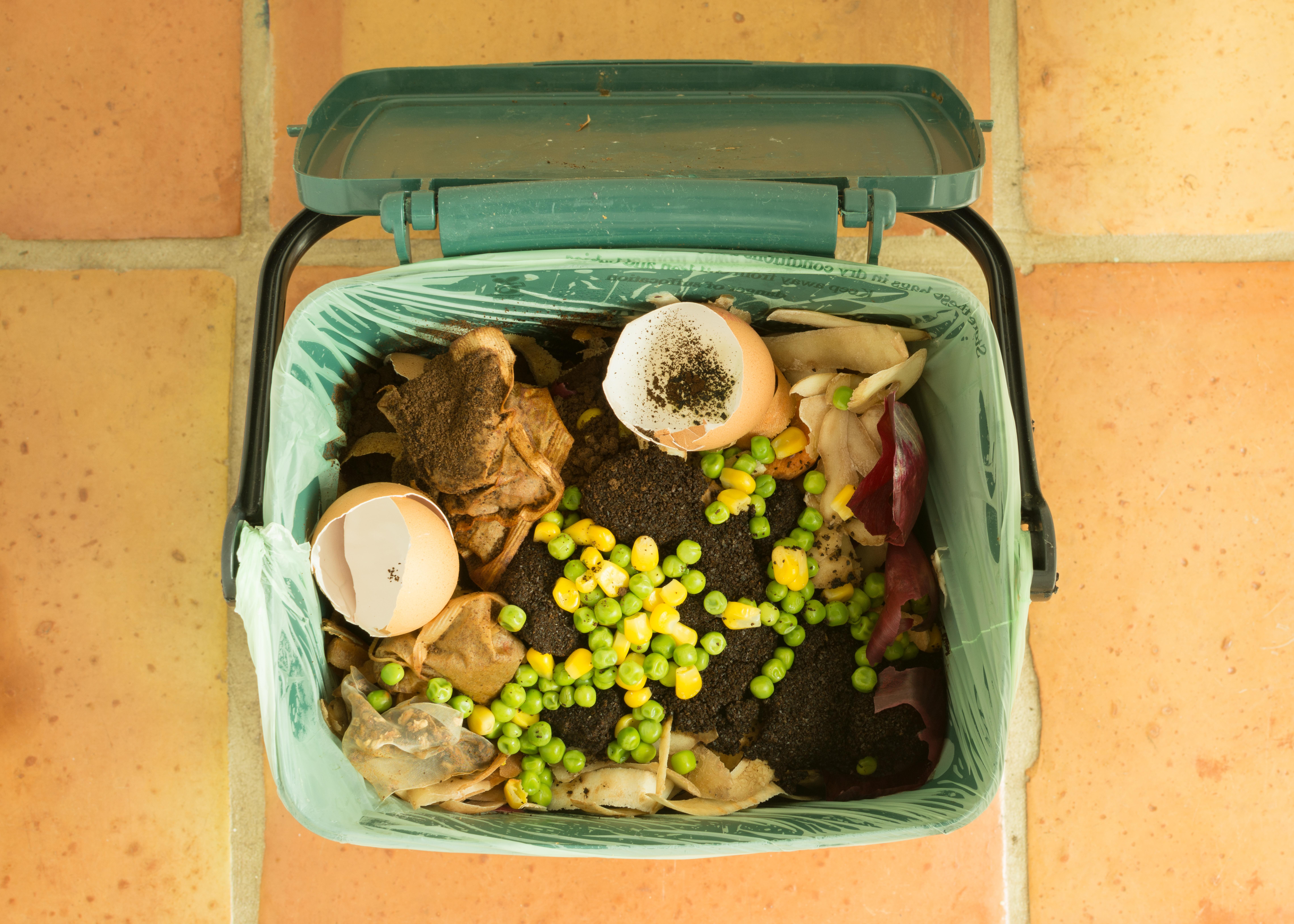 food waste_366308015