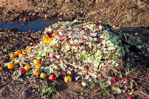 Consortium to harness value from agricultural waste