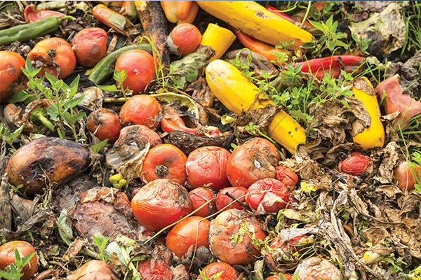 Fight Food Waste Research Centre launches new program